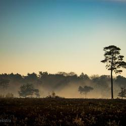 Strijbeekse Heide Nov 18