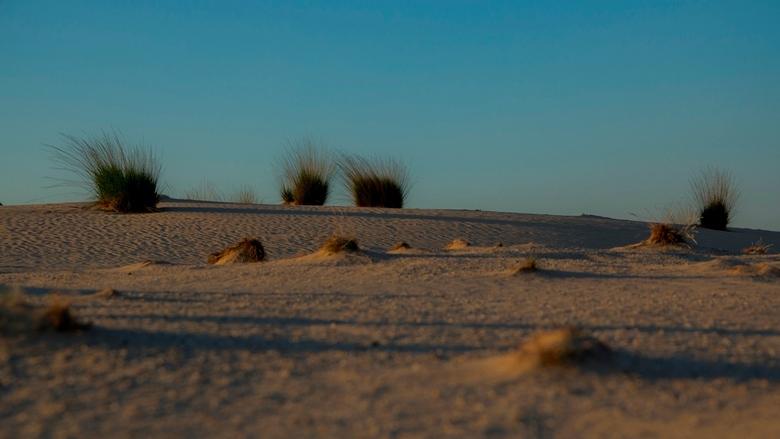 Drunense Duinen (2) - Stukje woestijn in Brabant.