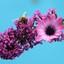 vlinderstruik special