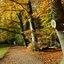 Herfstpalet in het Amsterdamse Bos