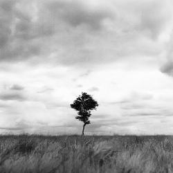 Minimalistisch landschap #3