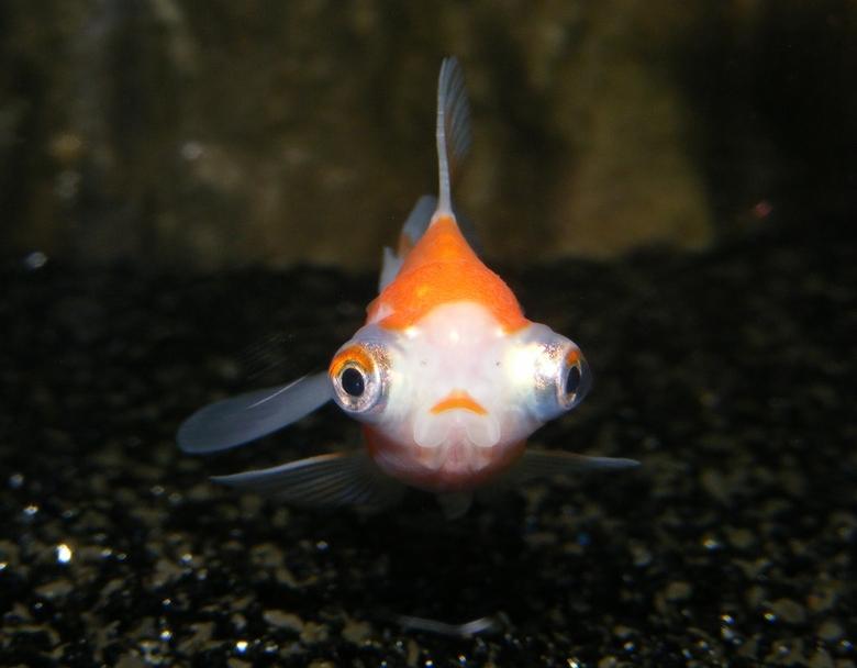 Blub - Vind het de lelijkste vis die er is maar je kan er prachtige foto's van maken.