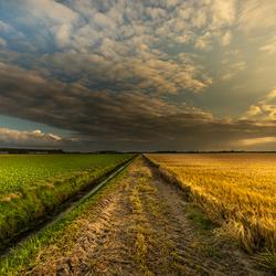 Gerst onder wolken en zon