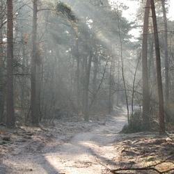 Zonnestralen op bosweg