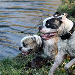 Dirty Bulldogs