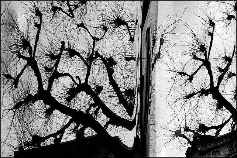 Artistiek natuur 07 - De natuur doet iets met je. Het geeft je rust, maar soms kan het je ook beangstigen. Nu hoor ik je denken, hoe bedoel je dat nu