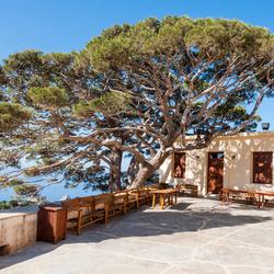 boom en bankjes klooster