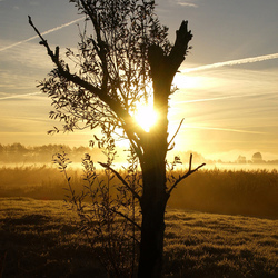 Natuur in Overijssel  wanneperveen