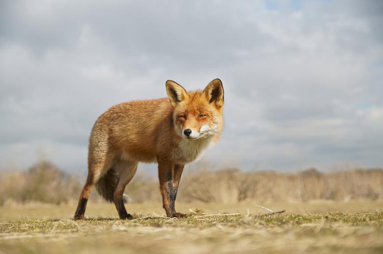 Reinhard! - Wat een prachtige dieren zijn het toch.<br /> <br /> bedankt voor de reacties op mijn vorige uploads.<br /> <br /> Grt Ed