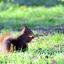 Eekhoorn aan het genieten van de zon