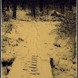 Winterse sporen