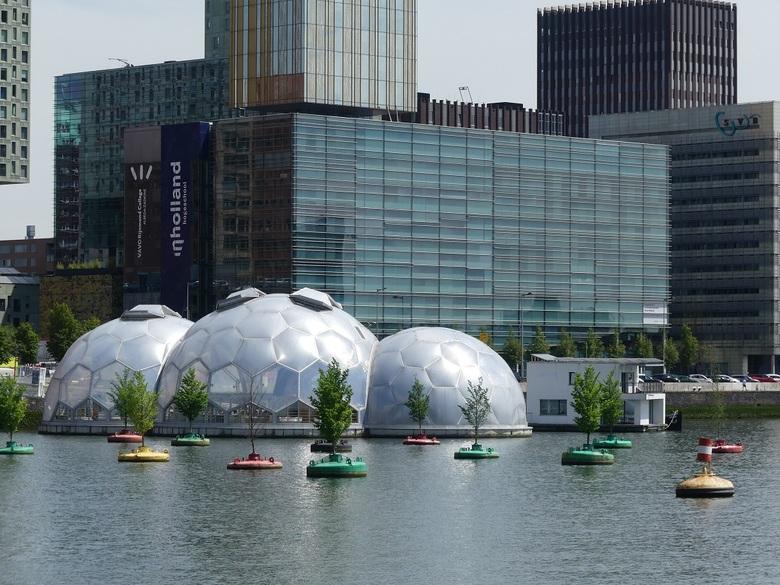 Rijnhaven - Het drijvende paviljoen en het drijvende bos in de Rijnhaven in Rotterdam omgeven door moderne architectuur.