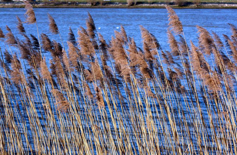 Riet natuur foto van jearon zoom.nl