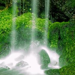 waterval Botanische zoomdag foto 7