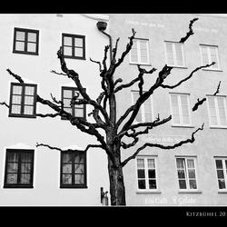 boom op huis?