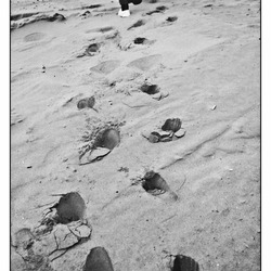 footsteps of a new day