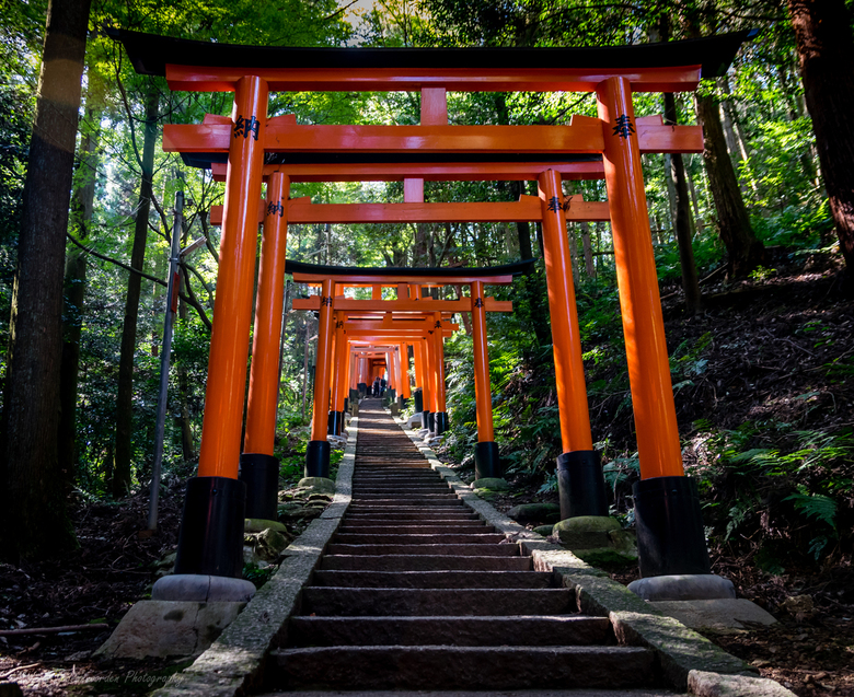 Endless torii gates