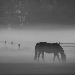Merrie in de Mist ( B/W )