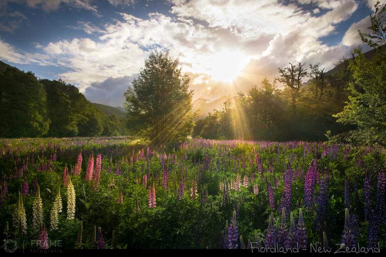 Valley of the Lupins - Na een lange dag rijden door het schitterende landschap van Fiordland National Park op het Zuidereiland van Nieuw Zeeland de ca