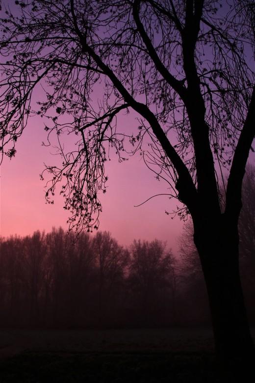Zonsopkomst - De mooie kleuren van de zonsopkomst.