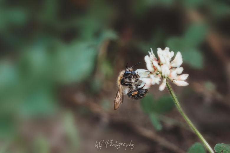 Even uitrusten met een goede bloem - Op zoek naar de beste macro foto zag ik dit beestje. Lekker genieten en in een mooie stand. Bedankt voor het pose
