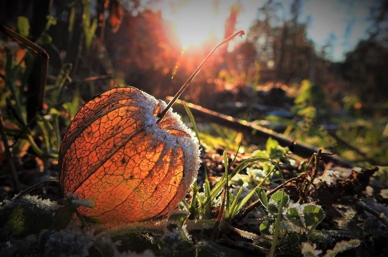 Herfst met een vleugje winter - zijn zulke leuke vruchten om fotoos van temaken .<br /> vergaan of niet vergaan en lekker met de lage zon zijn het ne