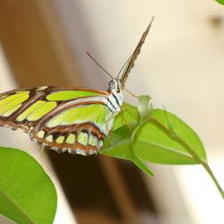 Vlindertuin te Knokke