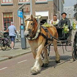 sjeesje rijden in Middelburg