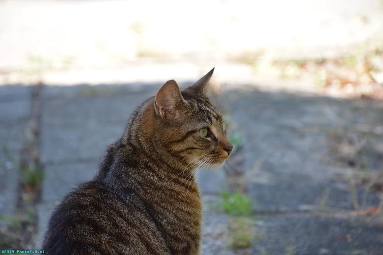 Neelix de kat. - Neelix de kat kijkt geïnteresseerd naar de overkant.