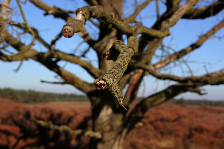 Bussumse Heide - Raak de tak aan...