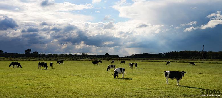 koeien Dussen - nog een van Dussen , ik vind de combinatie onweersluchten en zon altijd een bijzonder iets .