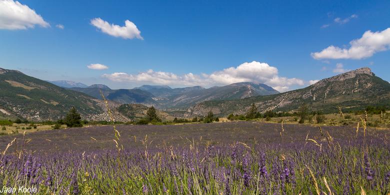 Lavendel op grote hoogte
