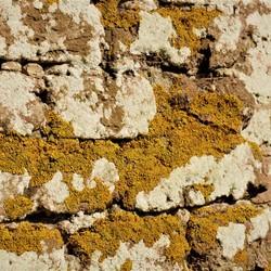 muur met korstmos