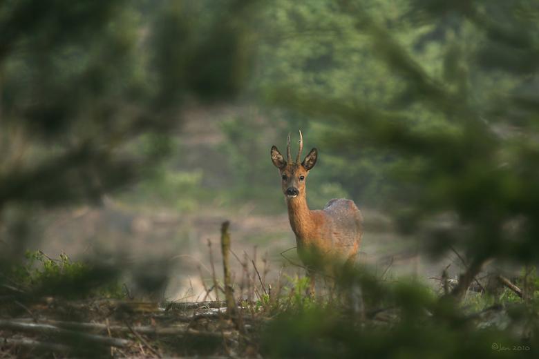Goeie morgen - Vrijdagmorgen 06.08 uur.<br /> Iedereen slaapt nog volgens mij en langzaam begint ook de natuur wakker te worden.<br /> De dieren zij