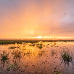 binnenveldse-hooilanden_landschap_zonsopgang