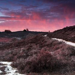 Pink hills