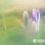 Dromen in het gras