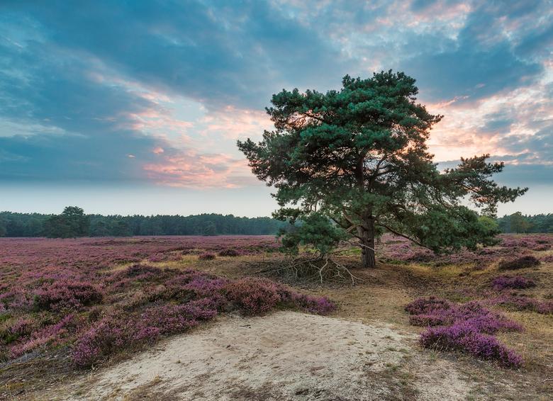 Het Groote Zand  Drenthe -