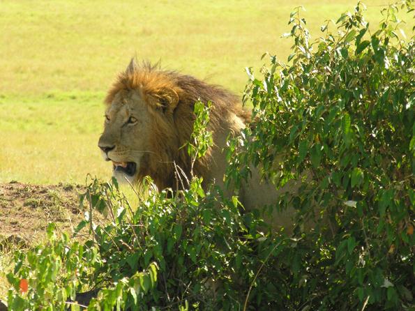 Wildlife Africa -