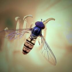 Series insecten.