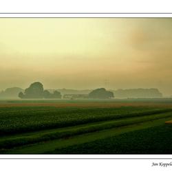 Mistige Biesbosch