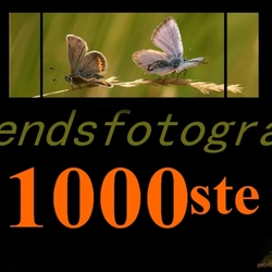 1000ste upload!!