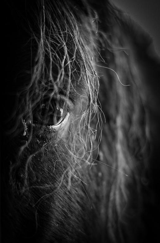 Pony - Dit is Kevin,het kleine paardje. Hij staat bij ons achter op de dijk. Aantal keer per week gaan we even langs om te knuffelen en wat lekkers te