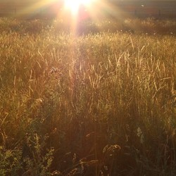 Zonsondergang over het Franse graan