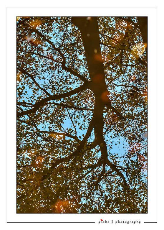 Reflections - Hierbij een herfstfoto uit Oranjewoud in Friesland. Ik liep door het bos en zag deze spiegeling van een boom in een plas water.<br /> <