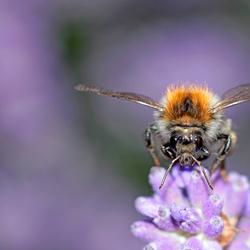 Op zoek naar honing