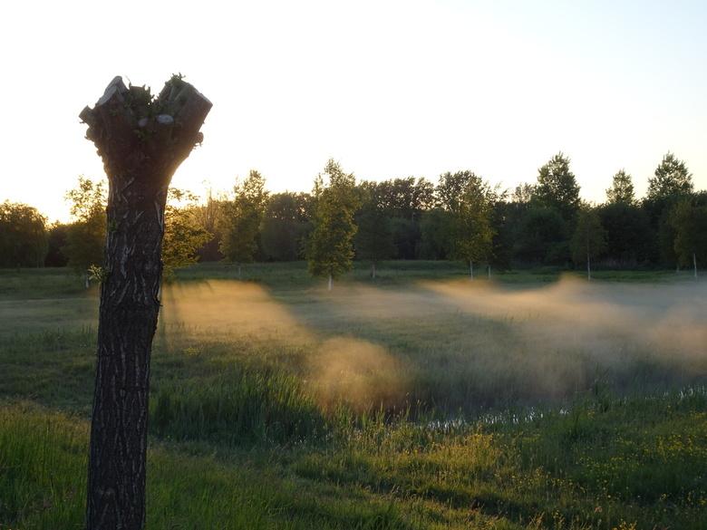 Zonnestraaltjes - Zonnestralen en ochtendmist in de vroege ochtend geven mooie effecten. Lansingerland (LSL) Bergschenhoek
