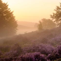 horse on the purple hills
