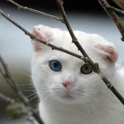bijzondere kat
