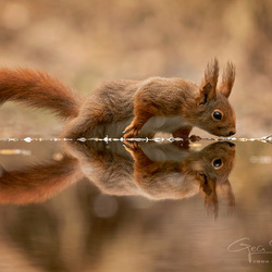 1229squirrels19_GSweb